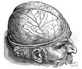 Cerebrum, le faiseur de réalités